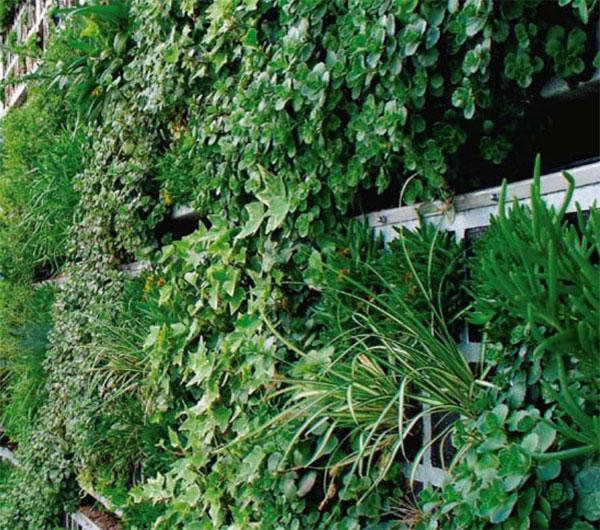 toldos-egara-jardines-verticales-02p